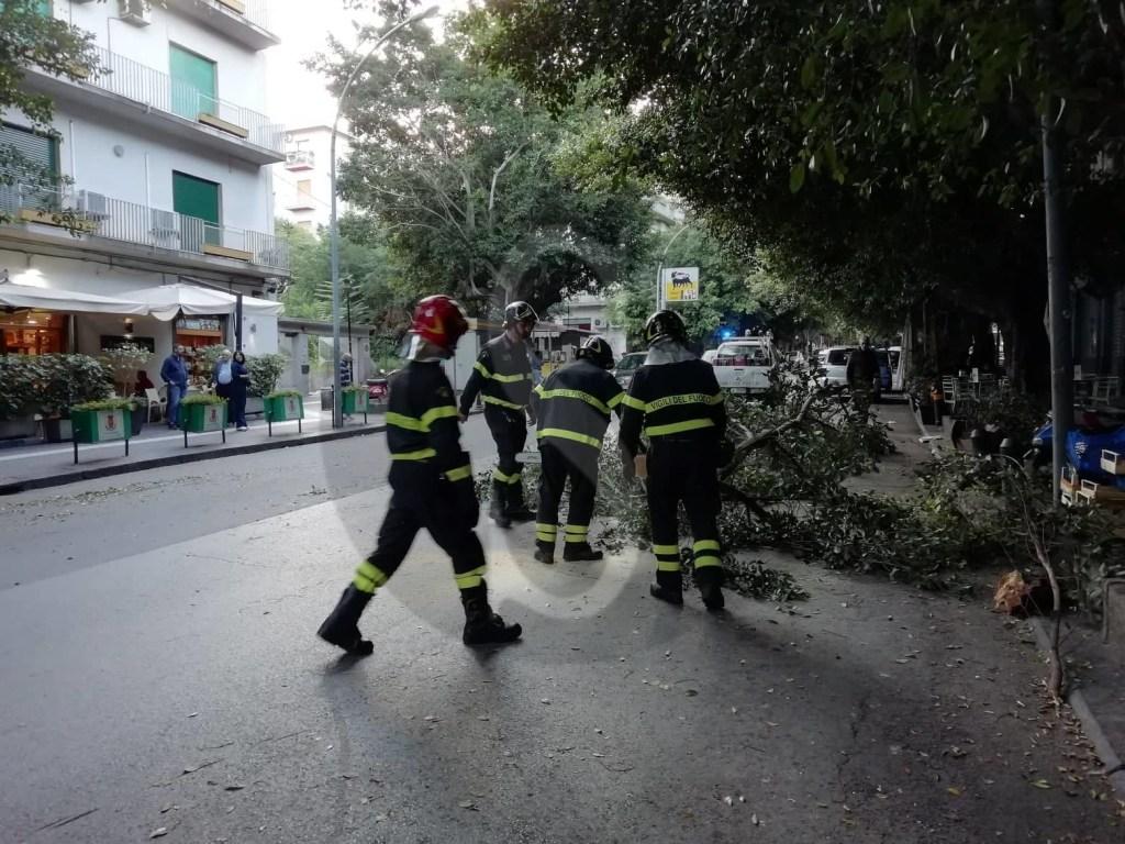 Ambiente. Messina, grosso ramo crolla in via Tommaso Cannizzaro