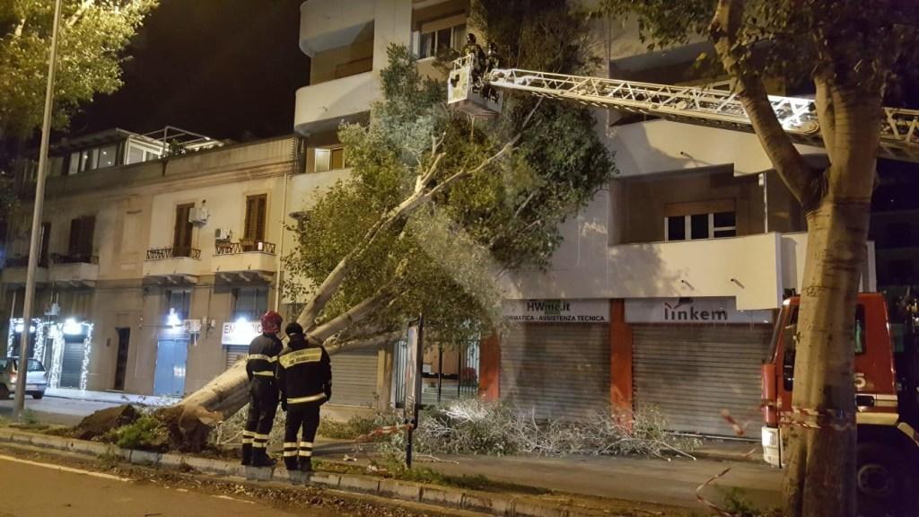 Cronaca. Messina, il vento flagella la città e sradica alberi: bloccata la tramvia