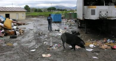 Cronaca. Maiali e rifiuti di ogni genere nel centro di raccolta del Comune di Milazzo