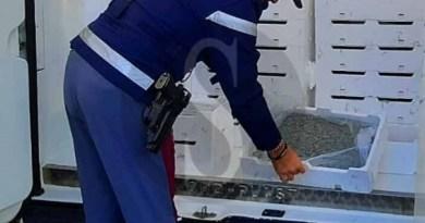 Barcellona PG, la Polstrada sequestra oltre 1.100 chili di novellame di sarda