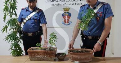 Spaccio di droga a Barcellona PG, coltivavano marijuana in balcone: in manette coppia di 26enni
