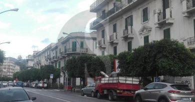 Verde in città, sagomatura per gli alberi di via Cannizzaro e delle piazze Casa Pia e Lo Sardo