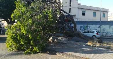 Barcellona PG, albero crolla in via Gramsci: tanta paura tra i passanti ma nessun ferito