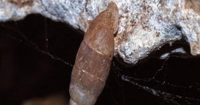 Isola delle Femmine, scoperta la presenza di una chiocciola endemica
