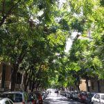 Urban Nature: gli Alberi dei Rosari !