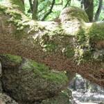 Da Rodi a Monte Polizzo: la natura ci offre forti emozioni senza chiedere nulla in cambio
