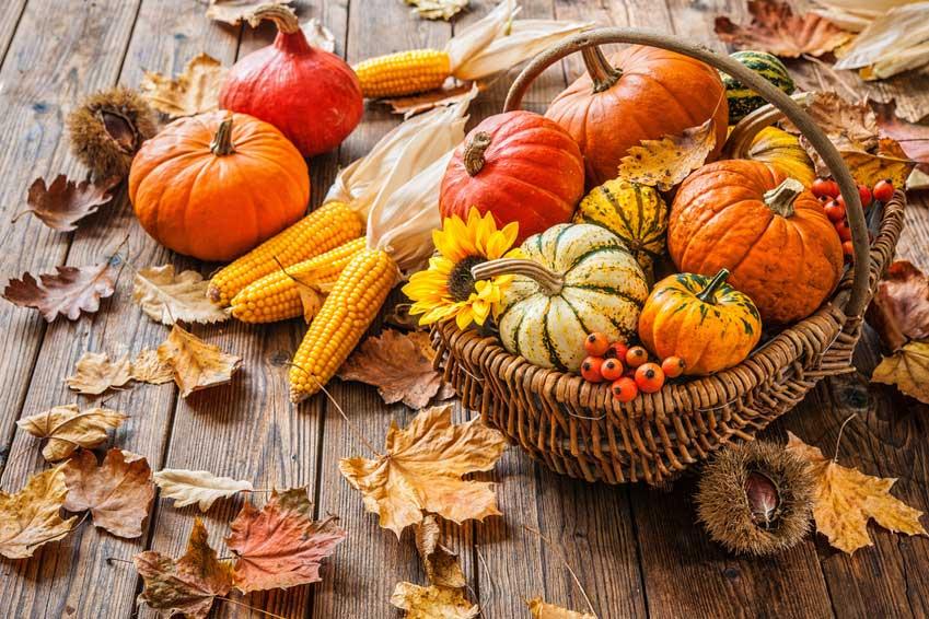 Vielfältige Herbstfrucht: der Kürbis