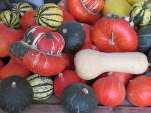 Herbstfrucht mit Gruselfaktor