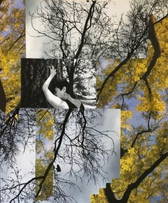 """""""Central Park has Saved my Life,"""" Collage by Janis Brenner, Photo by Muyassar Kurdi"""