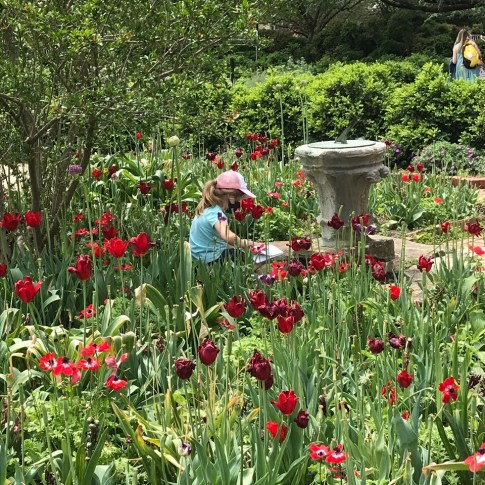 D.C. gardens