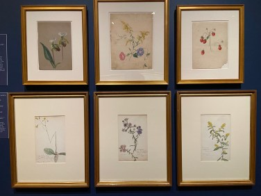Botanical works by Emily Cole (top row), Thomas Cole's daughter, and Isabel Church (bottom row), Frederic Church's daughter, are a reminder that women were artists too. The women were lifelong friends.