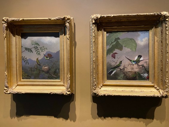 """Martin Johnson Heade's paintings of hummingbirds, like Frilled Coquette (left) and Black-eared Fairy (right), are quite different from Church's monumental canvases, but the two artists were friends. These famous works from Crystal Bridges Museum of American Art are on display at Olana as part of the """"Cross Pollination"""" exhibit."""