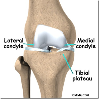 lateral condyle