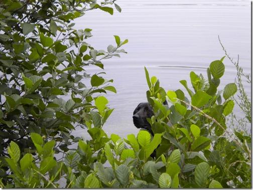 dog in pond