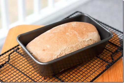 recipe for whole wheat bread