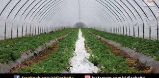Agriculture Department Sidlaghatta Drip Irrigation Scheme Government Apply