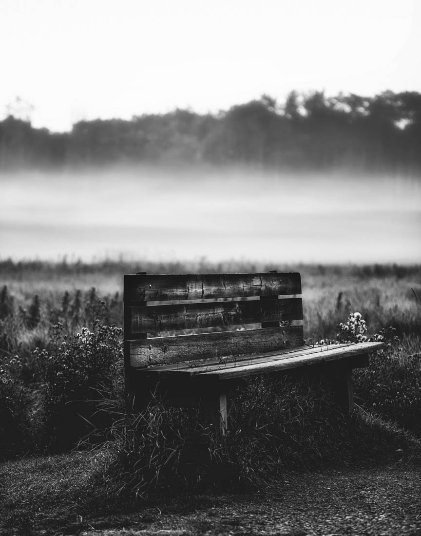 Weathered wooden bench during a foggy morning at Elk Island National Park, Alberta black and white landscape.