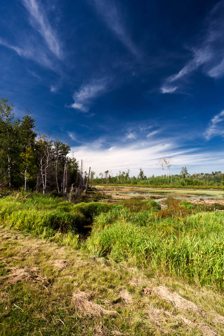 Marsh wetlands at Elk Island National Park during the late afternoon at the end of summer.