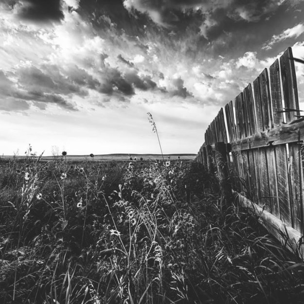 Bw fence lines a field of fowers and tall grass, blowing in the wind, towards the end of summer in rural Alberta, southern region near Pincher Creek. Alberta landscape.