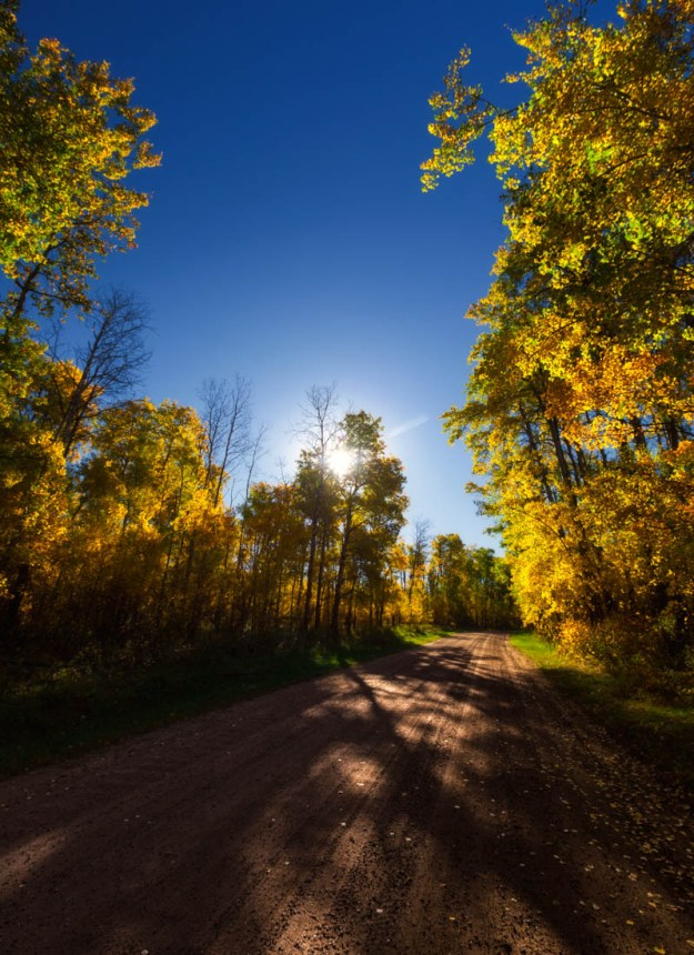 Sun shines through the autumn coloured trees at Elk Island National Park.