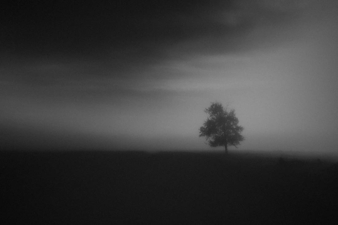Black and white lone tree along a gravel road during a pea-soup foggy autumn morning at Elk Island National Park.