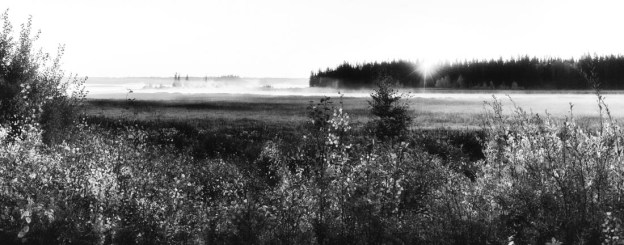 Black and white autumn sunrise with dissipating fog, Alberta landscape.