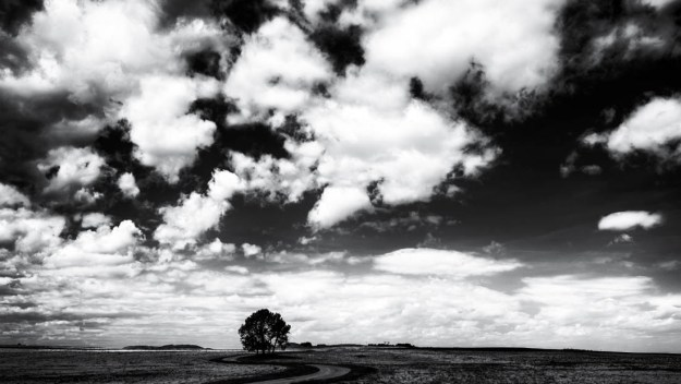 A lone tree and windy road during an early afternoon in spring, black and white fine art Southern Alberta landscape.
