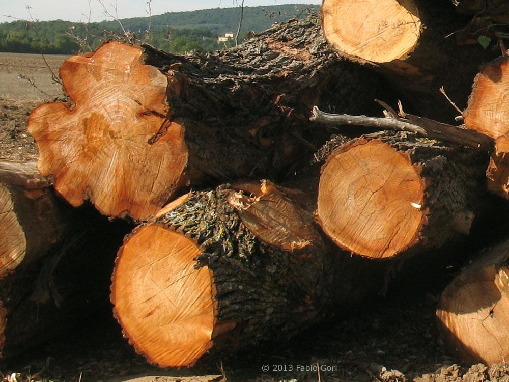 FALEGNAME FAI DA TE guida allacquisto ed alla lavorazione del legno