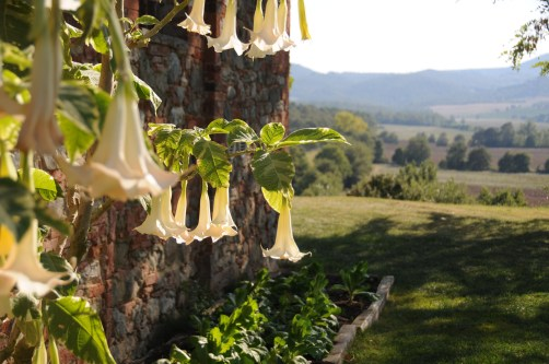 Image of the side of the house SW aspect in late afternoon showing close up of Datteri flowers and distant rolling hills parnorama.