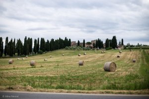 Image showing the medieval borgo Locanda l'Amorosa in Val di Chiana Sense in the foreground rolls of hay stretching out into the distance with cypress lined approach to the borgo at left and the historic property at top image courtesy of Alinamemet