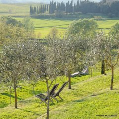 Image of two deck chairs in an olive grove with green grass and golden light