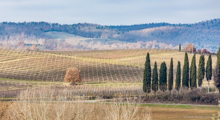Image showing winter tuscany landscape with cypress trees vineyards and farmland in the fore and mid ground being the property of the borgo boutique hotel locanda amorosa in sinalunga in the distance the oak covered rolling hills of trequanda under grey blue skies