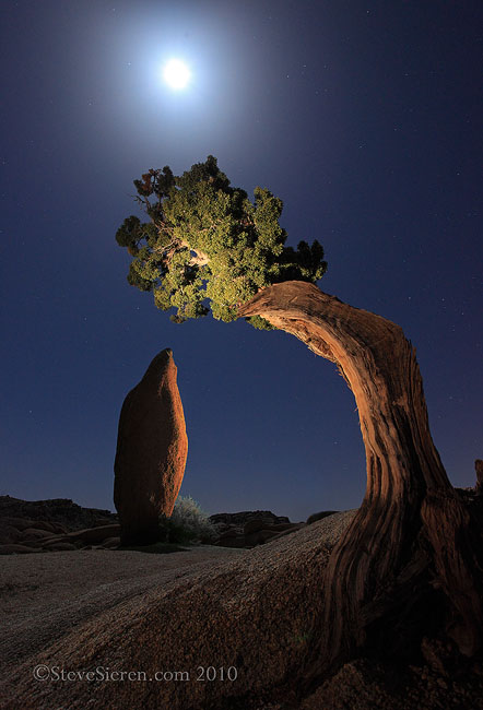 Lone Juniper Tree & Balanced Rock in Joshua Tree National Park