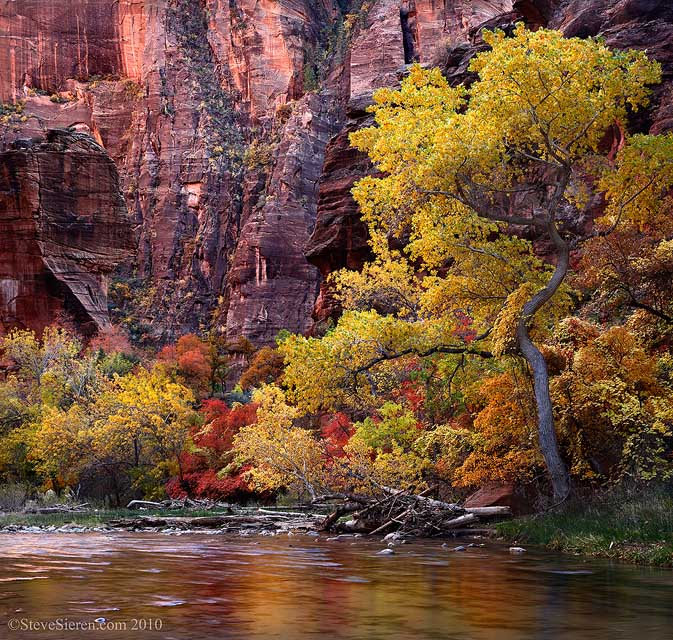 Zion's Virgin River with cottonwood and maple trees near the mouth of the narrows.