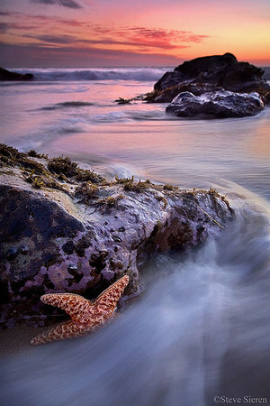A starfish clings for it's life during the sunset in Malibu, Southern California