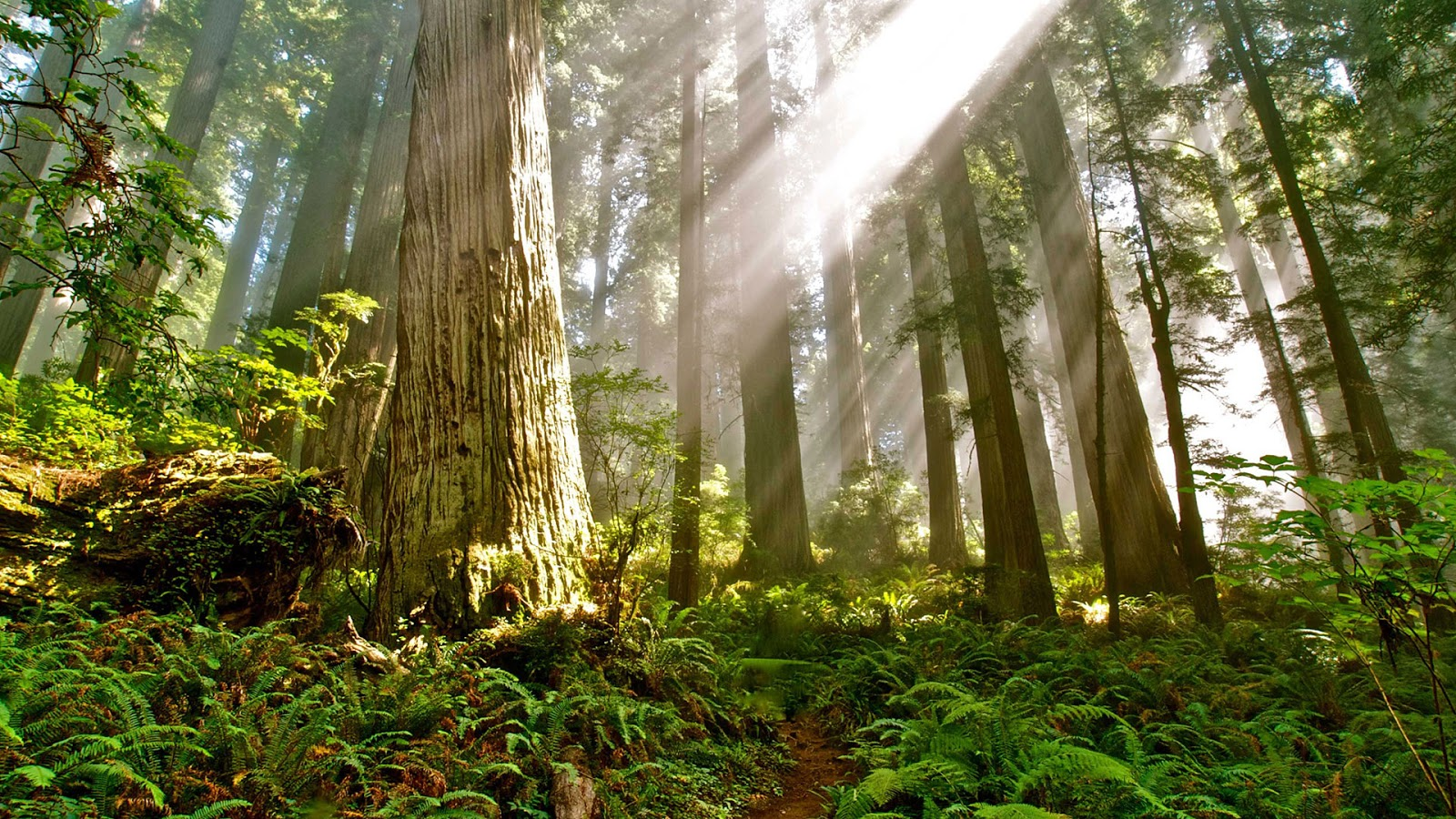 The investigation, released on wednesday, concluded the b.c. Maryland S Old Growth Forests Sierra Club