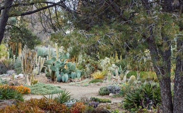 art of dry garden sierra