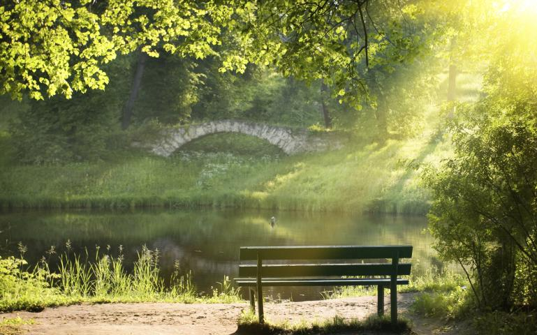 Park bench on a summer day