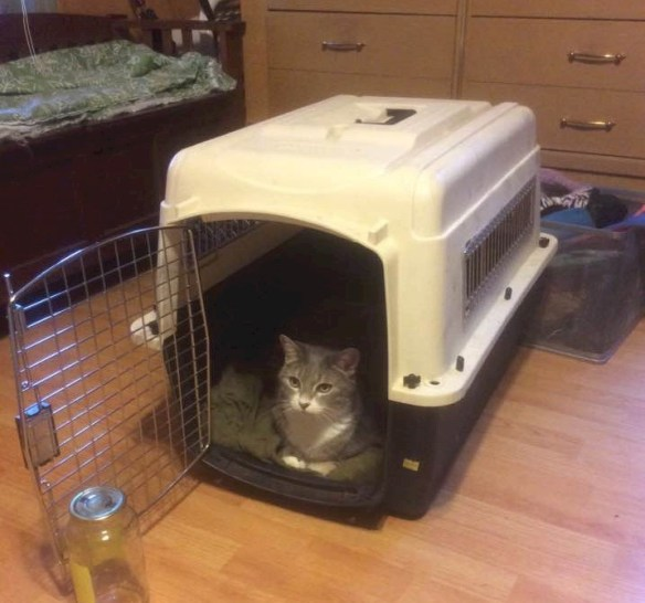 7/20/16 Yep, I'm ready... have crate will travel... never understood why cats don't like crates... look I'm protected and ready for anything... Guffin Cat