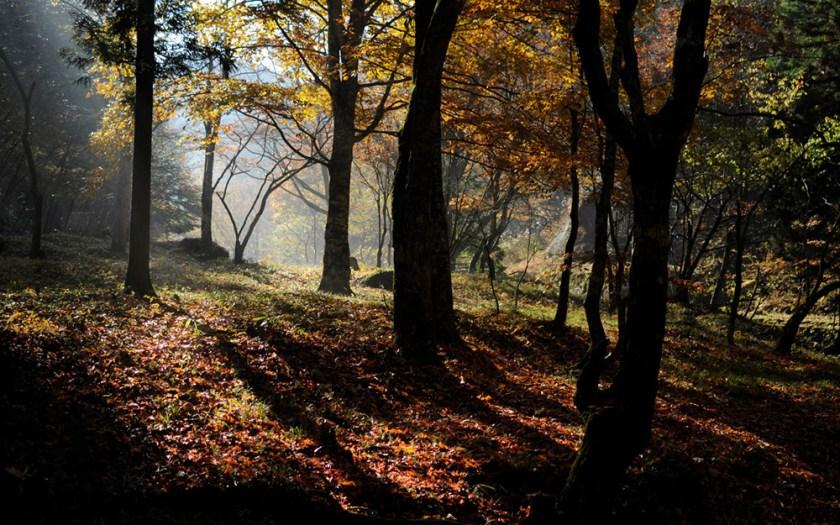 Bosque de maple en Talpa de Allende