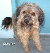 dog-scruffy