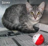 catblinky