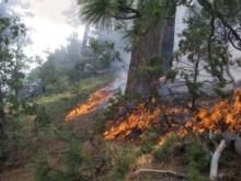 sheepfire-flames