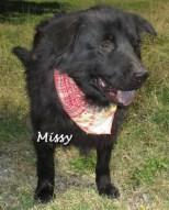 dog_missy