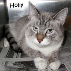 cat_holly