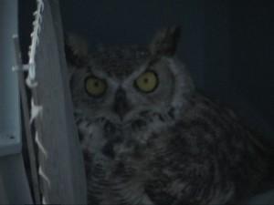 owlhoppy