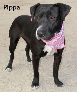 dogpippa