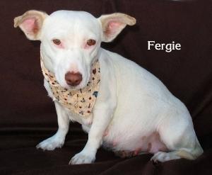 dogfergie