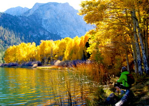 Alicia Vennos hiked to Walker Lake for this photo of aspen at its peak.