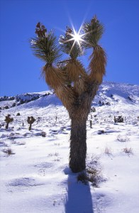 joshuatree_yuccaflat-credit-stephen-ingram